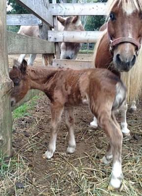 Ginger's New Baby Girl Filly